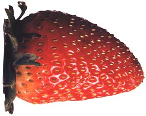 Strawberry, the favorite June fruit in Krakow